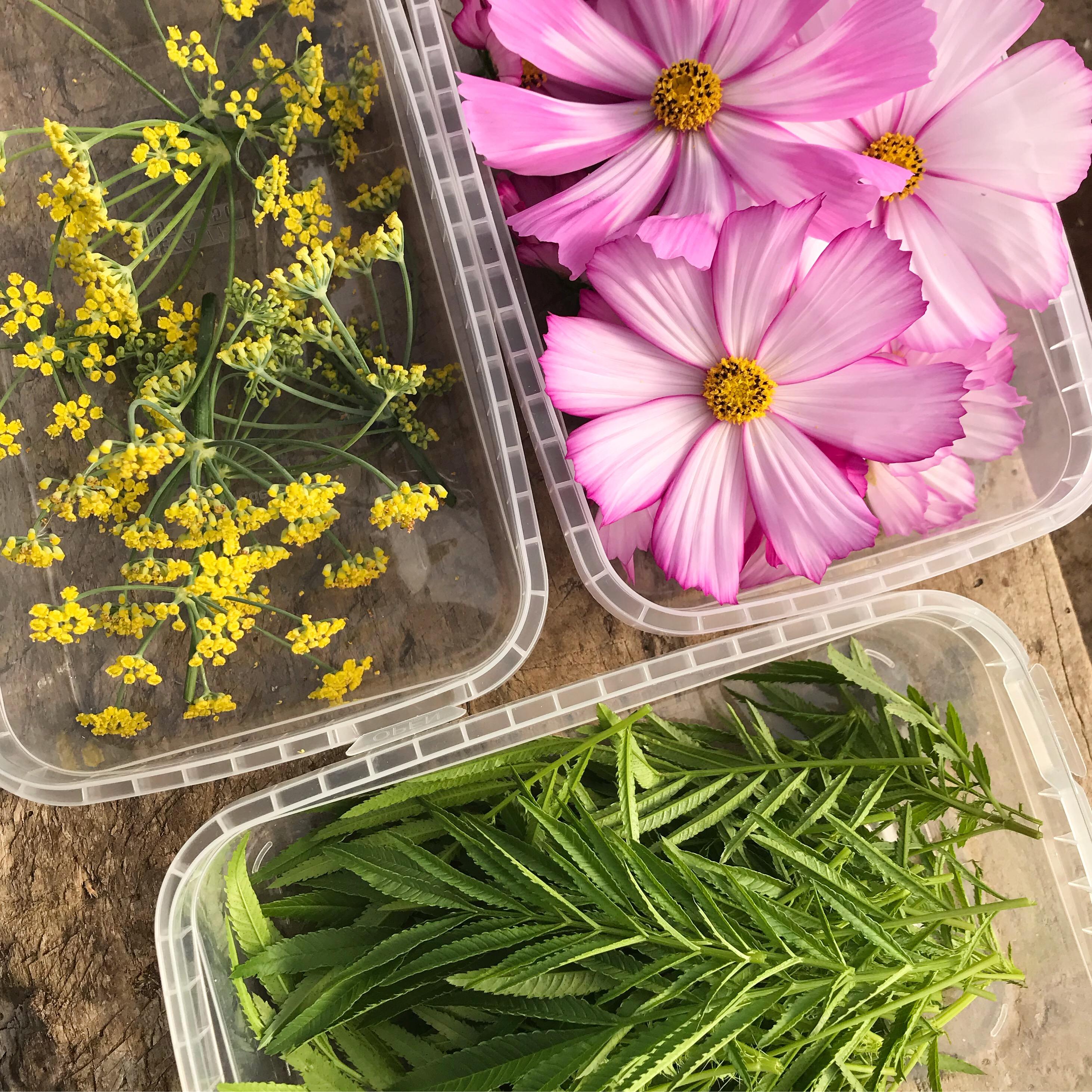 Fleurs et feuilles comestibles